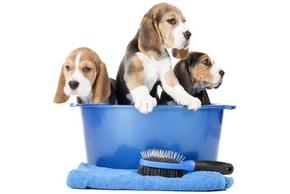 nettoyage chien