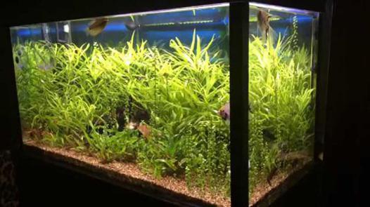 aquarium 300 liter