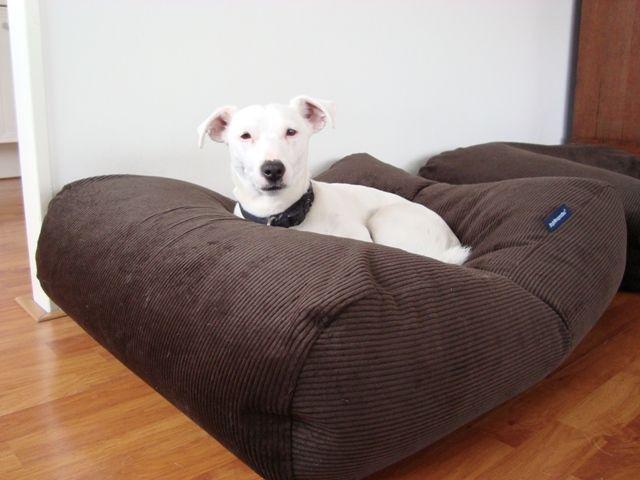 ▷ Avis Coussin pour gros chien 【 Le Meilleur Test et Comparatif