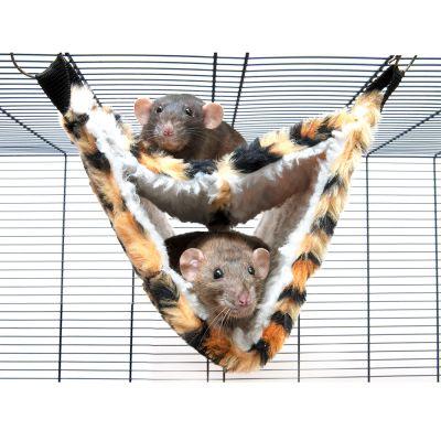 hamac pour rat