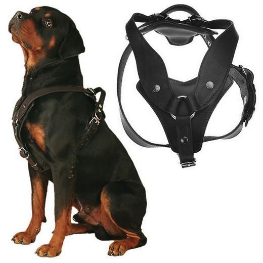 harnet pour chien