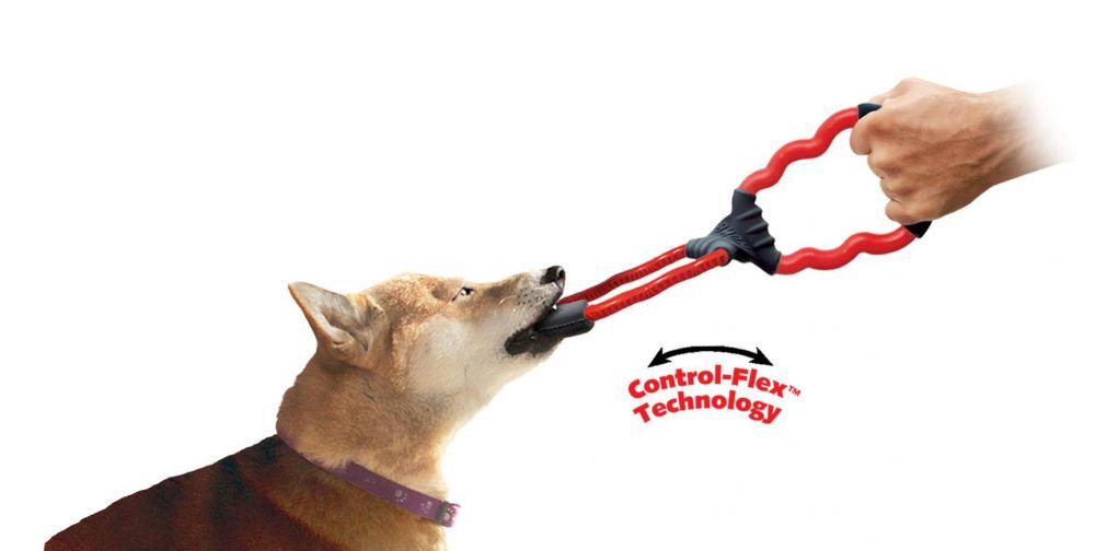 jeux pour chien