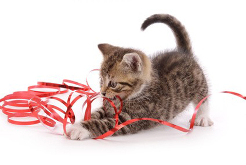jouer à chat