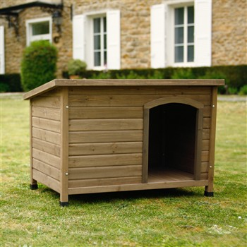 niche chien toit plat