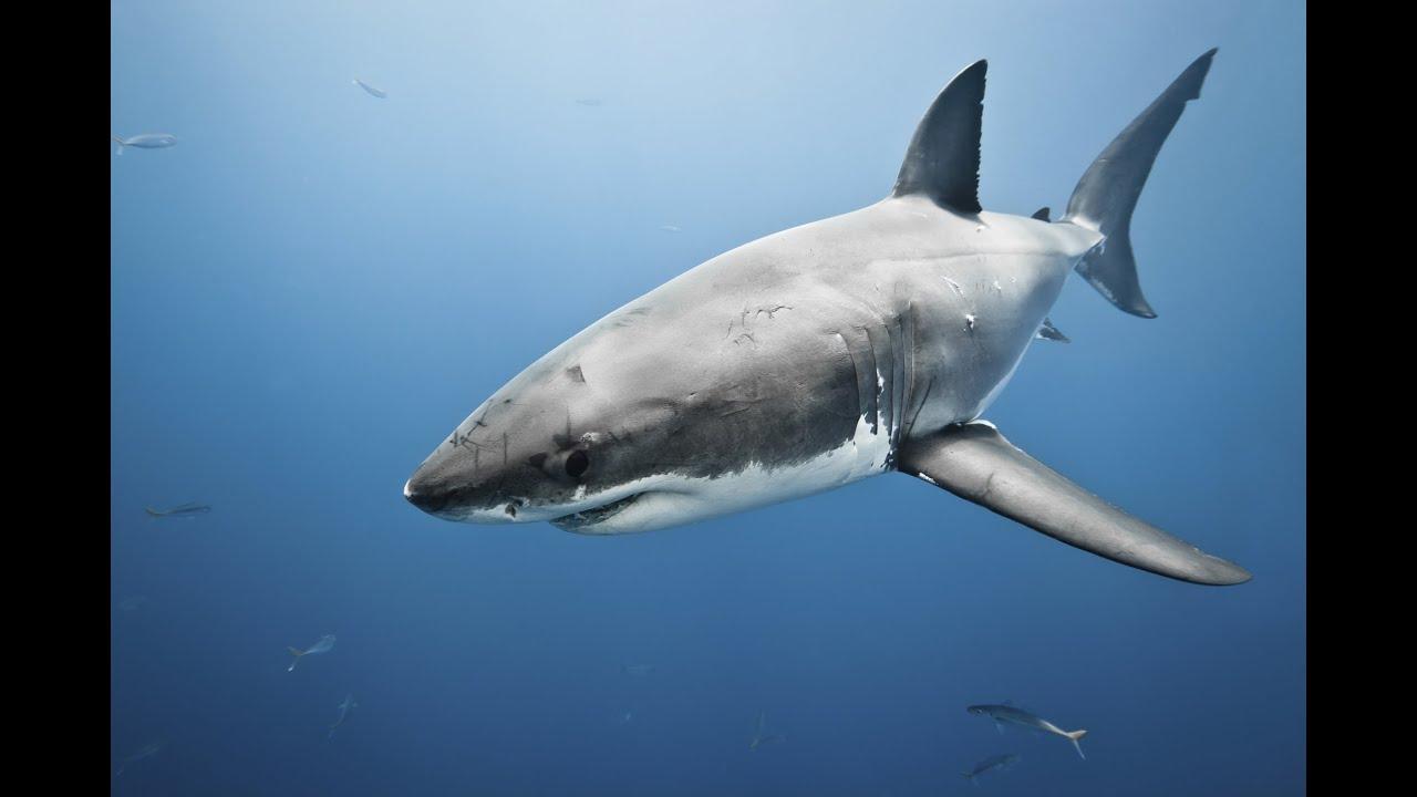 shark skin
